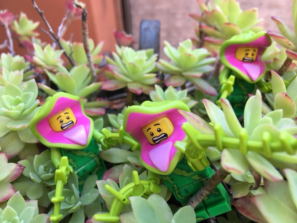 Brick_Pic_plant_life