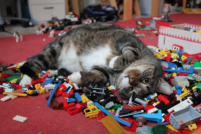 Cats And LEGO