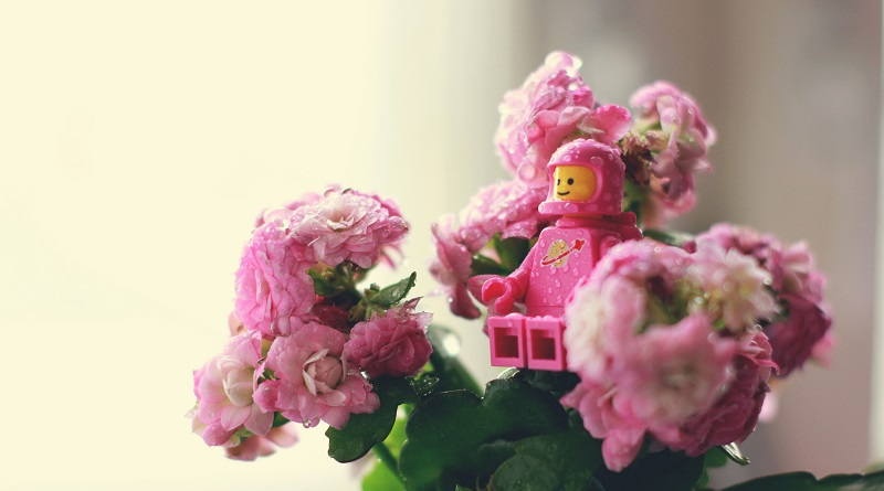 Brick Pic Everything Blossom Featured 800 445