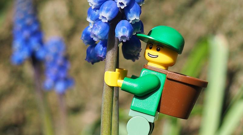 Brick Pic Pollen Featured 800 445