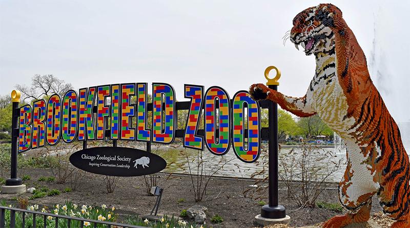 Brookfield Zoo Brick Safari featured 800 445