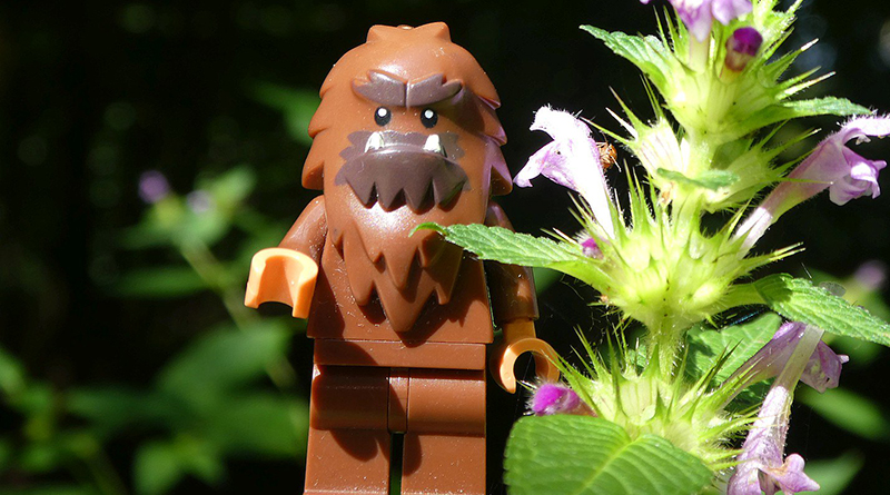 Brick Pic Bigfoot Featured 800 445