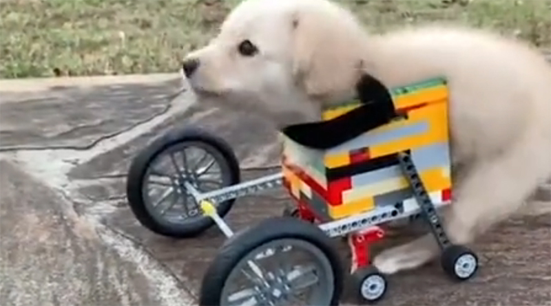 LEGO Dog Wheelchair Featured 800 445