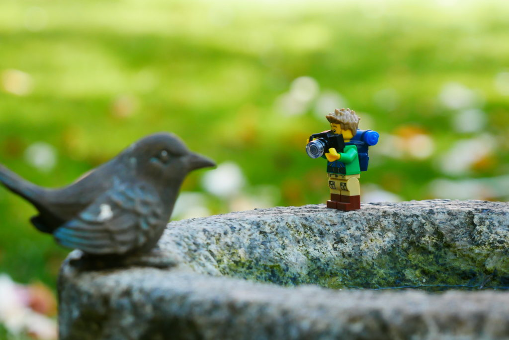 Brick Pic Bird