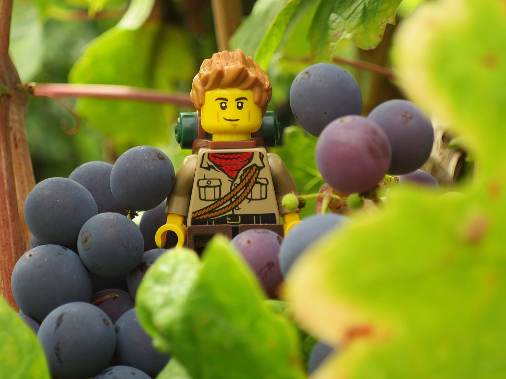 Brick Pic Grape Explorer