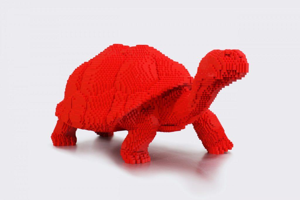 Galapagos Tortoise 3 NaturePOP 24 scaled 1