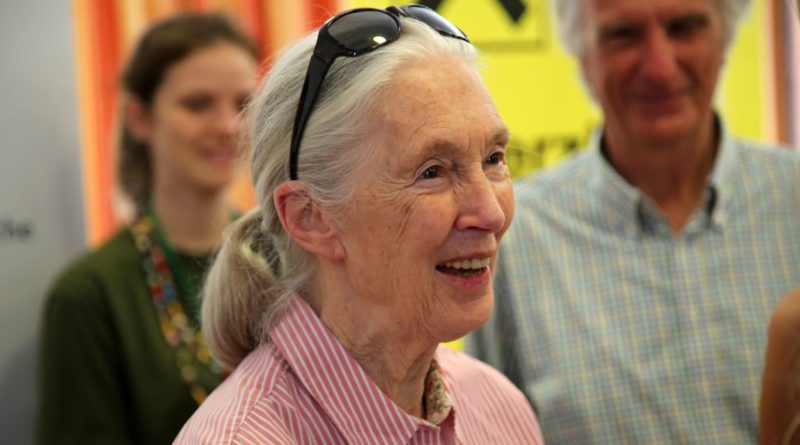Jane Goodall featured