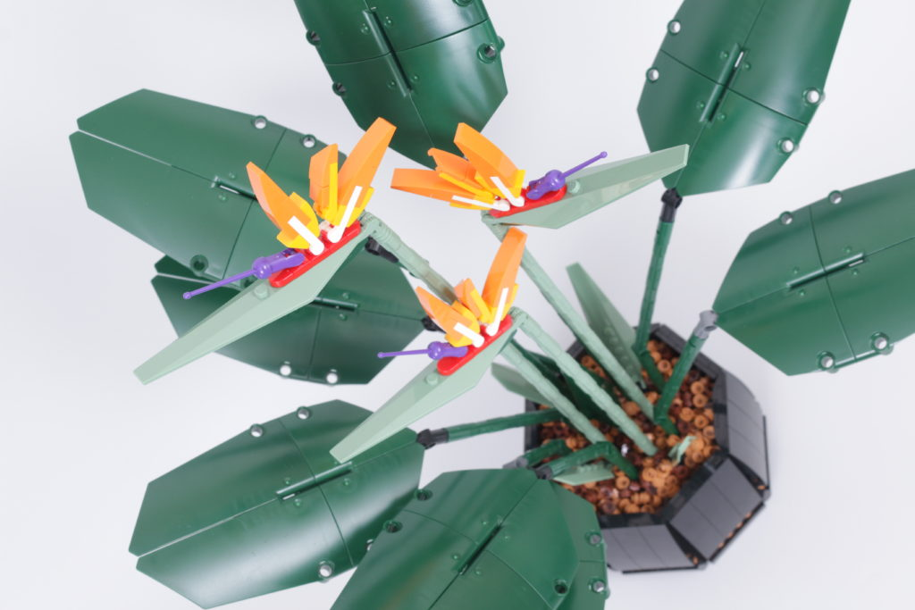 LEGO Botanical Collection 10289 Bird Of Paradise review 24