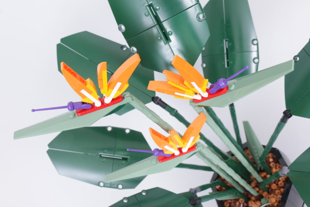 LEGO Botanical Collection 10289 Bird Of Paradise review 29