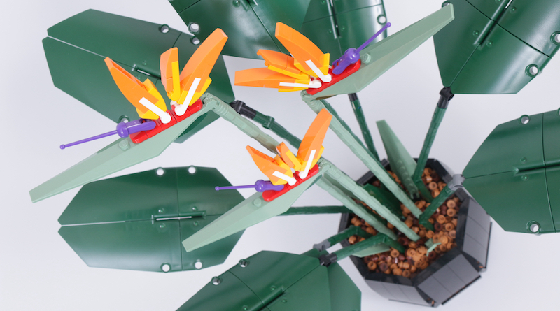 LEGO Botanical Collection 10289 Bird Of Paradise Review Title