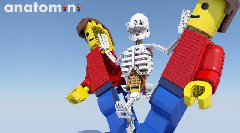 LEGO Anatomini Featured