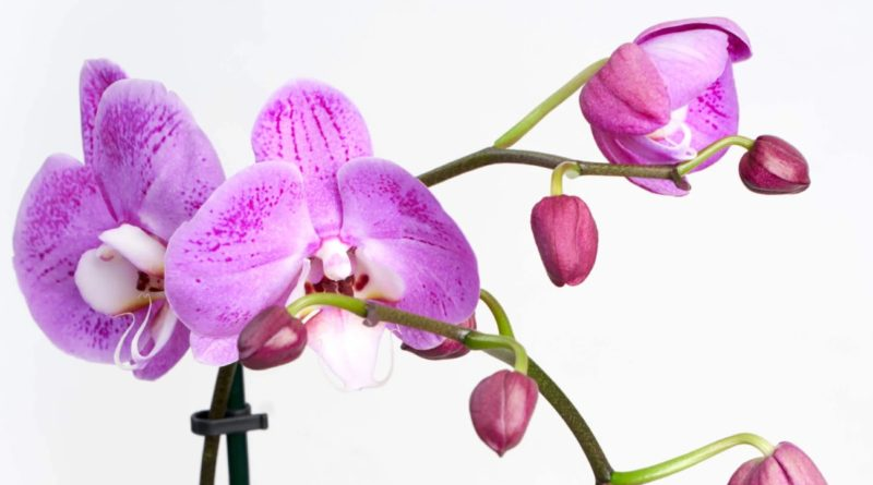 Orchid Bloomscape featured